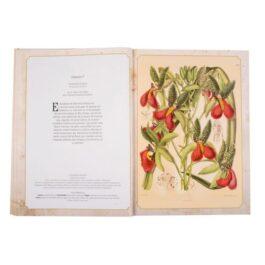 Maravillas de la Botánica + Láminas para enmarcar